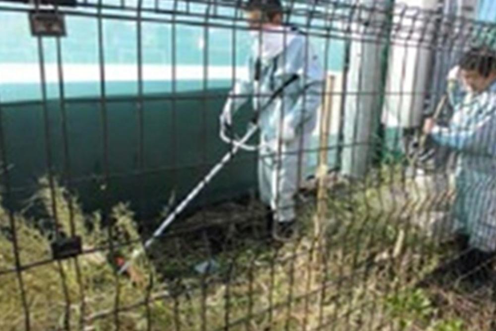 校庭裏の雑草処理